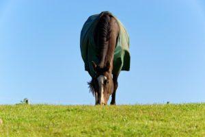 hest med daekken