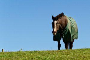 hest med daekken paa mark